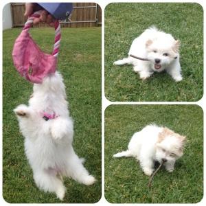 Playful Fluffball