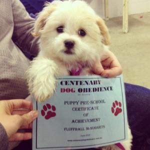 Puppy pre-school graduation
