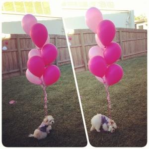 Birthday Fluffball